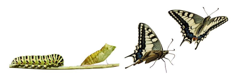 Métamorphose du papillon - les bienfaits du neurofeedback